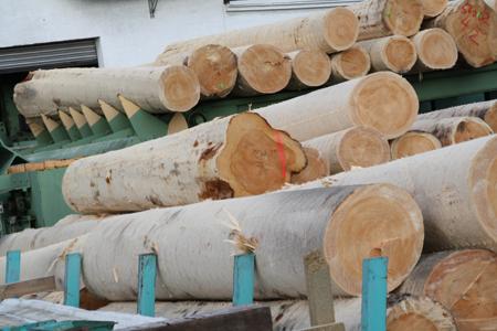 Nachhaltigkeit Wälder von Schreinerei FÄTH